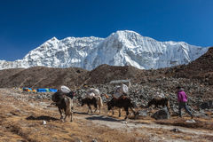 珠穆琅玛营地TREK/NEPAL - 2015年10月25日 免版税库存照片