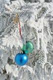 球上色包括的雪结构树二 库存图片