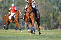 球员和马在马球 免版税库存照片