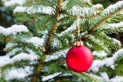 球圣诞节红色结构树 库存图片