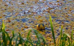 球在有秋天叶子的湖 免版税库存图片