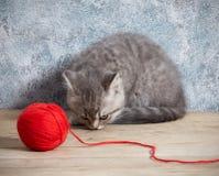 球小猫红色线程数 免版税库存图片