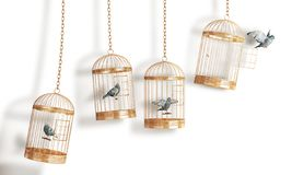 球尺寸三 开放鸟的在白色背景的细胞隔离 免版税库存照片