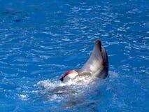 球海豚使用 免版税库存照片