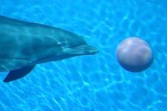 球海豚 库存照片