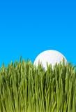 球特写镜头高尔夫球草 库存照片