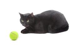 球猫网球 图库摄影