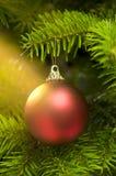 球白种人圣诞节冷杉实际红色结构树 免版税库存照片