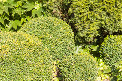 以球的形式装饰树 免版税图库摄影