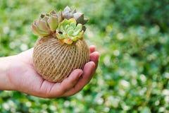 绳索球罐的逗人喜爱的小绿色多汁植物在妇女手背景 免版税库存图片