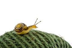 球蜗牛字符串 图库摄影