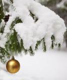 球装饰了云杉的枝杈 免版税库存图片