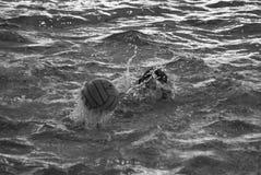 水球 免版税库存照片