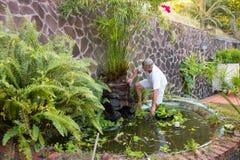 整理一棵纸莎草植物的一个人在热带 库存图片