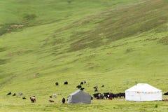 理塘,中国- 2014年7月18日:理塘镇的草原 一著名 免版税库存照片