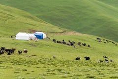 理塘,中国- 2014年7月18日:理塘镇的草原 一著名 库存图片