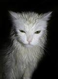 理想的猫 库存图片