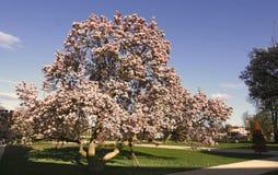 理想的结构树 免版税图库摄影