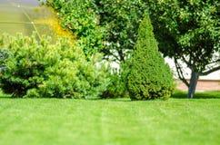 理想的绿色草坪后院和杏仁 免版税库存照片