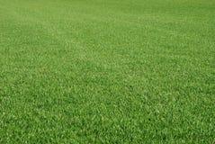 理想的草坪 库存照片