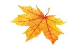 理想秋天金黄的叶子 库存图片