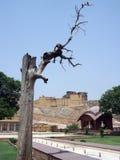 琥珀色的堡垒,斋浦尔,拉贾斯坦,印度入口  库存图片
