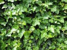 琥珀色的植物 免版税库存图片