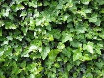 琥珀色的植物 库存图片