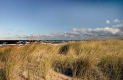 琥珀色的沙丘草通知 库存照片