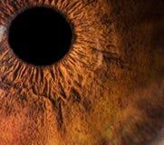琥珀色的眼睛宏指令 免版税库存照片