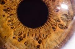琥珀色的眼睛宏指令 库存照片