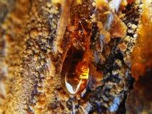 琥珀色的石珠宝 免版税图库摄影
