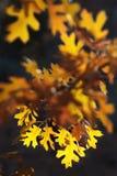 琥珀色的秋天 库存照片