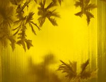 琥珀色的花 免版税库存照片