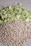 琥珀色的麦芽加上在平纹细布的夏天蛇麻草 库存图片