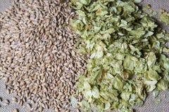 琥珀色的麦芽和夏天蛇麻草图象 免版税库存照片