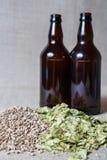 琥珀色的麦芽和夏天蛇麻草酿造 免版税图库摄影