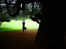 瑜伽树姿势 库存图片