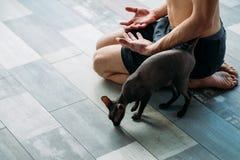 瑜伽训练伴侣健身房锻炼所有者猫 图库摄影