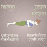 瑜伽 四有肢的职员姿势 库存照片