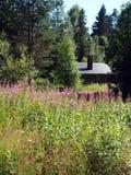 瑞典夏天牧场地Skräddar-Djurberga 图库摄影
