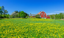 瑞典春天风景 库存图片