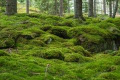 瑞典森林 库存照片