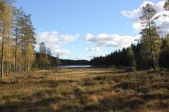 瑞典沼泽 库存照片
