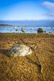瑞典海岸垂直的风景在2月 免版税库存照片