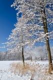 在湖海岸的冬天 免版税库存图片