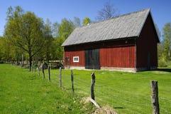 瑞典语谷仓的牛 图库摄影