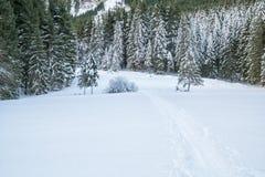 瑞士冬天-在雪盖的森林 免版税库存图片