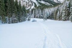 瑞士冬天-在雪盖的森林 图库摄影