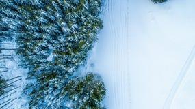 瑞士冬天-树从上面 库存照片